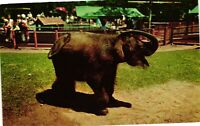Vintage Postcard - Baby Elephant Children's Zoo Brookfield Illinois IL  #6212