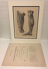 Antique 1832 BOURGERY Hand-Tinted Aquatint Anatomy Veins Leg Engraving with Text