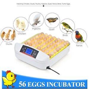 56 egg incubator - Fully Automatic Incubator with temprature & humidity control