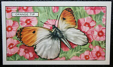 ORANGE TIP     Spring Butterfly   Original  Vintage Colour Card ## VGC