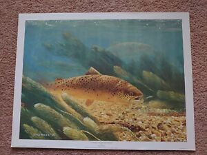 Angling Fishing Fish Fisherman Wall Art Trout Print Poster by David Miller