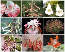 SINNINGIA VARIETY MIX @ exotic rare caudex plant seed 50 SEEDS