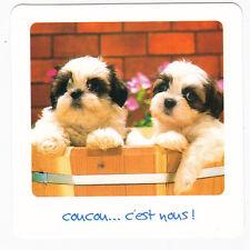 CHIEN  Chiot   CHIENS  carte postale   n°  FFU 0046  Coucou... c'est nous !