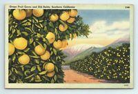 Grape Fruit Grove Old Baldy Mount San Antonio Southern California Postcard
