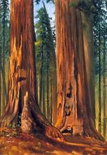 "Stunning Oil painting Gilbert Munger - Redwoods (Giant Sequoias) landscape 36"""