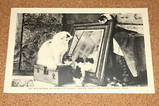 Vintage Postcard: Cat and Kittens, Henrietta Ronner, Woburn Abbey
