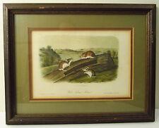 J.J. AUDUBON / J.T. BOWEN - 1850s ROYAL OCTAVO PRINT -  WHITE FOOTED  MOUSE - XL