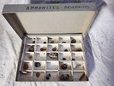 Collection fossiles école de géologie, DEYROLLE cabinet de curiosité n4