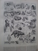 The Kennel Club Dog Show at Crystal Palace 1883 old print