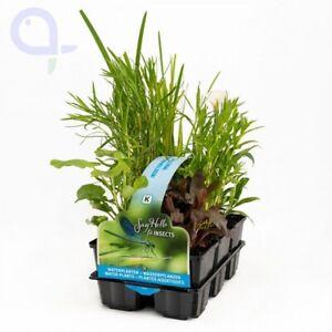 Teich Pflanzen Set Insektenfreundlich - Wasserpflanzen Set 6 Teichpflanzen