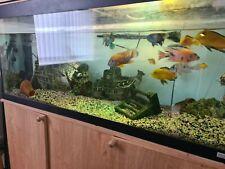 Fluval 200L Fish Tank