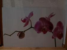 Nischenrückwand, Spritzschutz, Fliesenspiegel, Motivwand, Orchidee, gebraucht