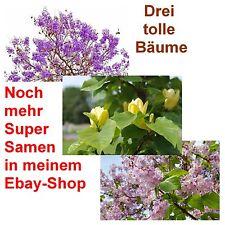 drei tolle Bäume im Spar-Set: Palisander-, Tulpen- und Blauglockenbaum !