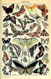 Vintage Victorian Butterfly Poster Canvas Picture Art Print Premium Quality