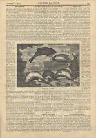 1881 Sleeping Fish Antique Engraving Theories Berlin Aquarium Carp Old Print