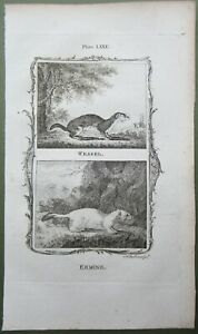 Weasel & Ermine Antique Print Copper Plate Engraving Buffon Natural History 1791