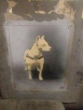 Superb Antique Chalk Portrait White Staffordshire Bulldog Or White Pit Bull Dog