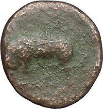 Syracuse in Sicily 317BC Agathocles Tyrant  Ancient Greek Coin Bull Nymp i49794