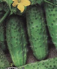 Cucumber seed  Parade Vegetable Seed from Ukraine BUSH