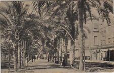 Tarjeta Postal. Alicante. Nº 24. Paseo de la Explanada.