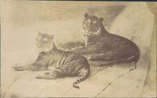 Postcard Tigers Real photo Kodak Australia card  unposted