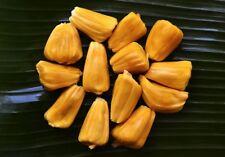 New listing New 30 seeds Jackfruit seeds 100% fresh organic tree germination fresh clean