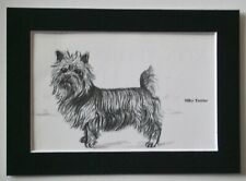 Silky Terrier Dog Print Gladys Emerson Cook Bookplate 1962 5x7 Matted Cutie