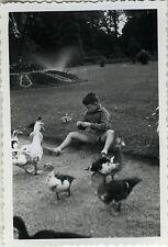 PHOTO ANCIENNE - VINTAGE SNAPSHOT-ANIMAL OISEAU CANARD TARBES JARDIN MASSEY 1954