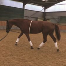 Mark Todd Lunging Aid Cream - Full - Improves back muscles when lunging
