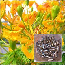 Yellow Delonix regia 20 Seeds, Flam-boyant, The Flame Tree, Royal Poinciana