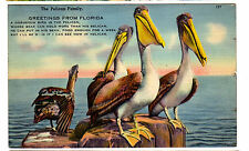 1940 postcard- Greetings From Florida. The Pelican Family.