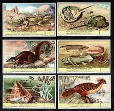 Prehistoric Animals Alive Today Card Set Liebig 1959 Crab Shell Lizard Fish Bird