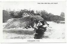 RRPC Exaggeration Photo Postcard THE FISH ARE FULL OF FIGHT