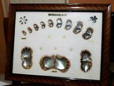 Framed Series Of Cultured Pearl & Shell Growth **JAPAN