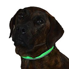 Green Jaguar Mesh Led Light Dog Collar Rechargeable