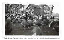 Man Surrounded By Turkeys ! Vintage Snapshot Photo
