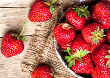50 SEQUOIA STRAWBERRY PLANTS - CERTIFIED - Great in California and the South