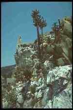 214034 CACTUS Garden EZE PROVENZA FRANCIA A4 FOTO STAMPA