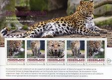 More details for netherlands 2017 mnh amur leopard leopards endangered wild animals 5v m/s stamps