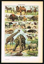 1922 Giraffe, Elephant, Buffalo, Camel, Deer, Antique Zoology Print - Larousse