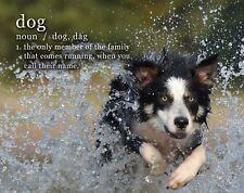 Border Collie Dog Motivational Poster Art Print 11x14 Treats Veterinarian WEB09
