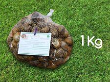 Lumache escargot da gastronomia 1 kg a ciclo biologico Helix Aspersa Muller