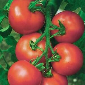Vegetable - Tomato Seeds - Premium Quality 10 Varieties - Free Postage 1st Class