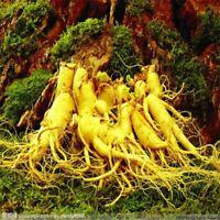 100 Semillas De Ginseng Alta Calidad