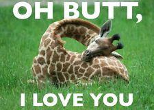 "Funny  Giraffe  refrigerator magnet 2 1/2 x 3 """