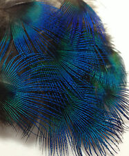 10 Natural Blue Peacock Neck Plumage Feathers Craft Millinery Jewellery