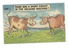 Cows Cow Farm Milk Machine         UNUSED Postcard