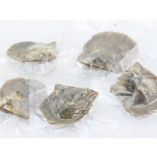 5PC Twins Saltwater Akoya Oyster with Round Pearls Akoya Shell Twins Pearl 6-7mm