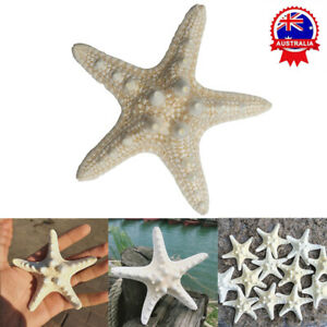 10Pcs Dried Starfish Beach Craft Wedding Party Home Decor Hanging Ornaments