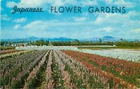 Chrome Postcard AZ I417 South Phoenix Japanese Flower Gardens Baseline Road
